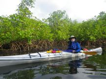 Paddling alongsidse the mangroves