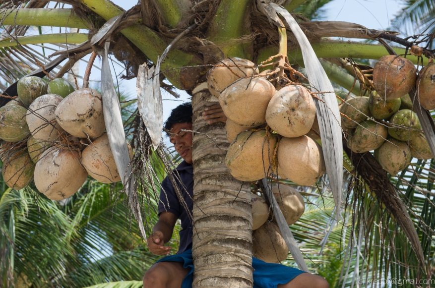 I'll take one coconut, por favor