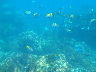 Amazing snorkeling in the Caribbean