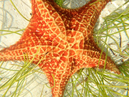 Sea Star in crystal-clear water