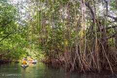 Exploring the mangroves, Guna Yala