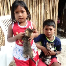 Our little friends with their little kitties