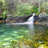 Tidewater abundance