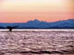 whale13-300x225