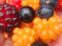 Blueberries and Salmonberries