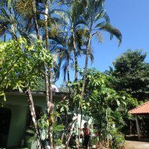 Hostal Iguana Verde in Malena