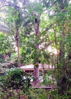 Yoga studio tucked into nature