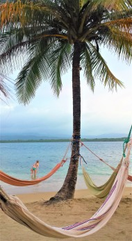 Perfect hammock tree