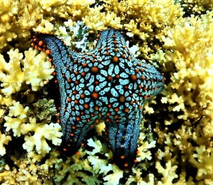 Underwater life, Isla Coiba
