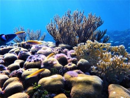 Snorkeling in Guna Yala