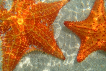 Sea Stars in Guna Yala
