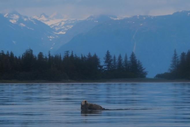 Sea Otters always delight