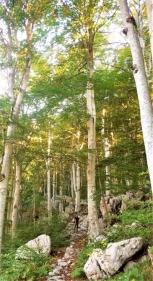 Forest bathing, Paklenica National Park