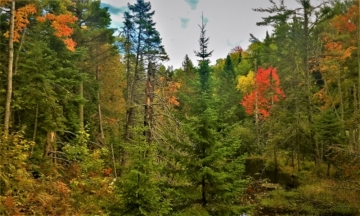 Vibrant fall foliage on the Copper Harbor Trail System