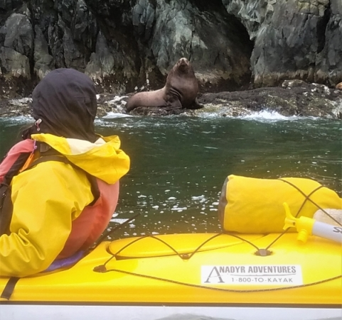 Up-close-and-personal with Steller Sea Lions, Glacier Island